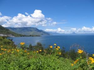bloemen tobameer 300x225 - Lake Toba