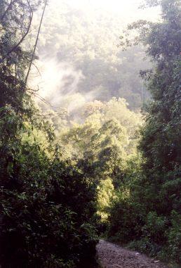 brastagi jungle - Brastagi