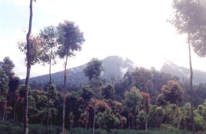 The Kerinci National Park