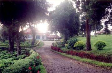 kerinci tea garden