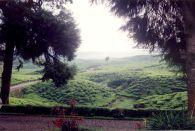 Kerinci Tea Plantations