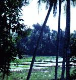 sawa1a1 - Medan in literature
